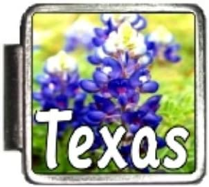 Amazon Com Clearly Charming Texas State Flower Bluebonnet Photo