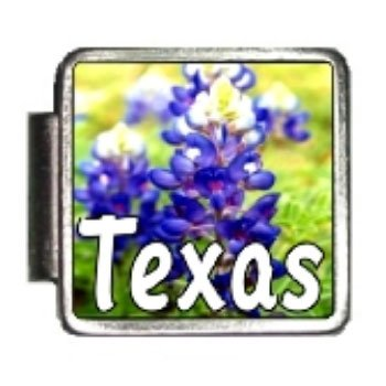 Clearly Charming Texas State Flower Bluebonnet Photo Italian Charm Bracelet Link