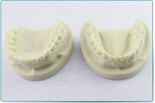 Easyinsmile New White Corundum Teeth Teaching Model Tooth Model