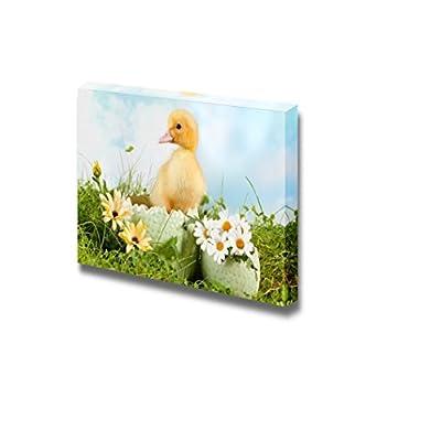 Canvas Prints Wall Art - Peeping Newborn Easter Duckling in a Daisy Garden - 24