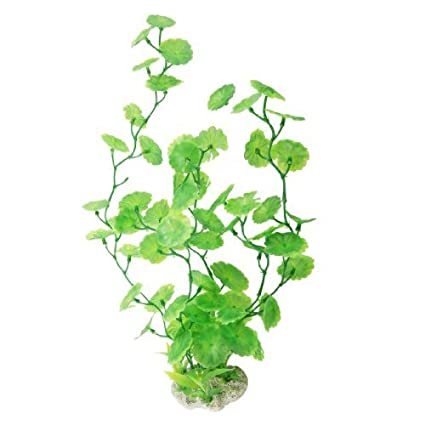 Amazon.com : eDealMax borde festoneado hojas redondas de plástico decoración del acuario Flora, Verde : Pet Supplies