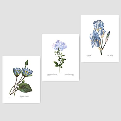 (Set of 3) Botanical Prints (Blue Wall Art, Redoute Flower Home, Cottage Decor) Lily, Plumbago, Iris – 8x10 Unframed -