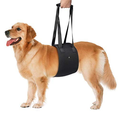 Black Medium Black Medium Pets Dog Action Hand Training with Traction Belt Pet Dog Lift Support Rehabilitation Harness Canine Aid Assist Sling for Injured Dogs,Black,M