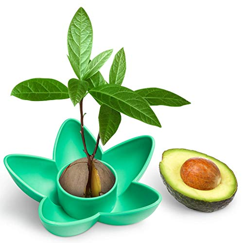 HENMI Avocado Planting Seed Germinator Bowl Avocado Tree Growing Kit for Garden Indoor Balcony Planting Kitchen Garden Seed Starter Gift Practical Gardening Gifts (Best Soil For Avocado Seed)