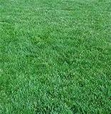 The Dirty Gardener Elite Kentucky Blue Grass Blend, 10 Pounds