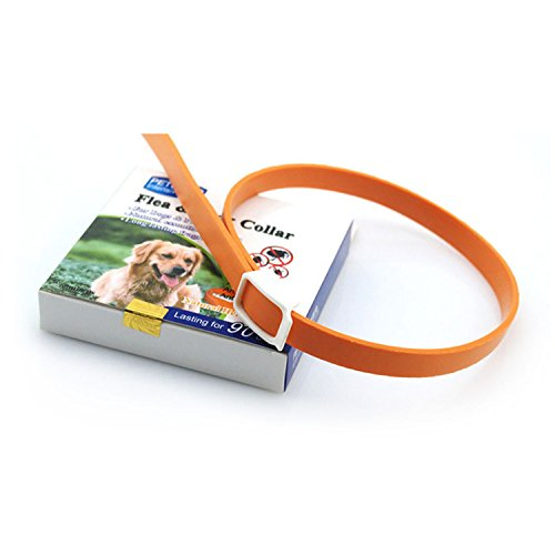 Prevention for Dogs, Flea Control Collar for Dogs and Puppies for Quick and Long Lasting Protection, Orange M (Revolution Flea Control)