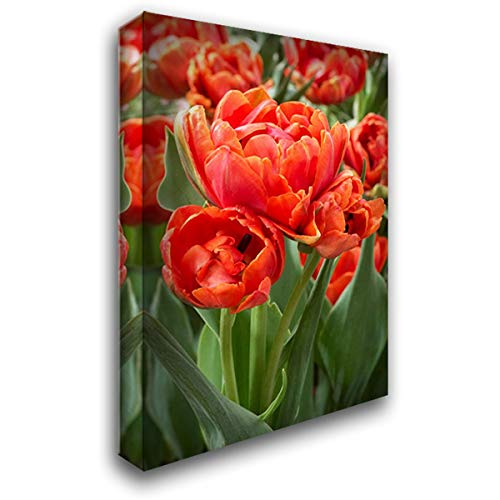 ArtDirect Tulip Grand Rapids Variety Flowers 28x40 Gallery Wrapped Stretched Canvas Art by VisionsPictures
