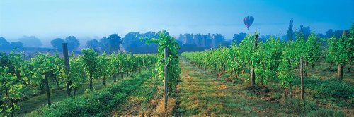 Walls 360 Peel & Stick Wall Murals: Vineyard and Hot Air Balloon Sussex (84 in x 28 in)