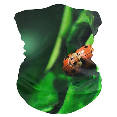 (Two Mating Seven-Spotted Ladybugs Outdoor Magic Headband Multifunctional Elastic Seamless BandanScarf UV Resistence Sport Headwear)