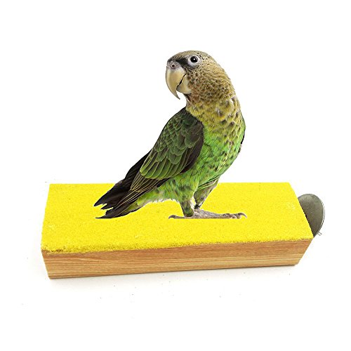 Borange Bird Perch Parrot Perch Natural Wood Sand Platform Nail Trimmer Flat Perches for Birds and Small Aninals Cockatiel Parakeet Conure Rat Mouse Hamster Gerbil Cage Accessory by Borange