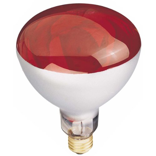 Globe Electric 03917 250 watt Incandescent