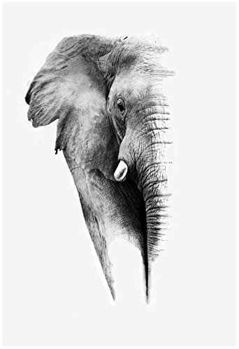 Artistic Black And White Elephant Poster by Donvanstaden