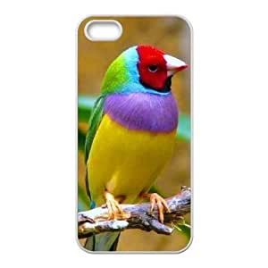 Birds ZLB603642 Customized Case for Iphone 5,5S, Iphone 5,5S Case