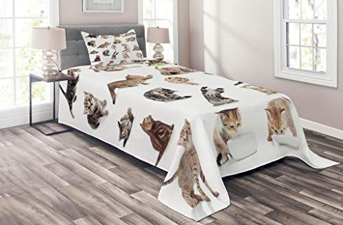 Lunarable Cat Coverlet Set Twin Size, Collection of Funny Playful Baby Kitten Pet Scottish Tabby Striped Pussu Animal Design, 2 Piece Decorative Quilted Bedspread Set with 1 Pillow Sham, Grey White