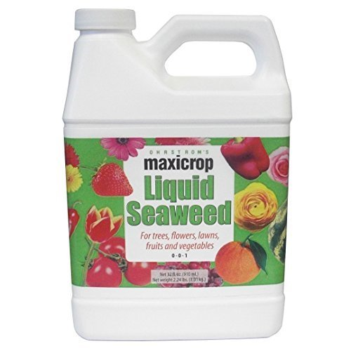 Maxicrop Liquid Seaweed (Kelp Extract) (1 liter (35 oz.)) by Maxicrop USA