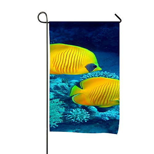 (Andrew Brown Double Sided Premium Garden Flag,Animal Butterflyfish Fish Garden Flags - Weather Resistant & Double Stitched - 18 x 12 Inch)