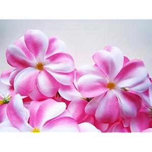 "(24) Pink White Hawaiian Plumeria Frangipani Silk Flower Heads - 3"" - Artificial Flowers Head Fabric Floral Supplies Wholesale Lot for Wedding Flowers Accessories Make Bridal Hair Clips Headbands Dress 19"