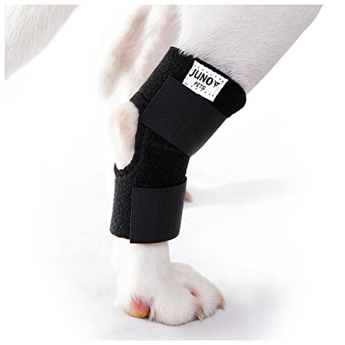 JunoPets Dog Canine Rear Leg Knee Brace, Hock Joint Wrap for Heals and Prevents Injuries and Sprains, Helps with Loss of Stability (Hind Foreleg, Small)