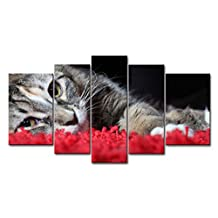 Black & White And Red 5 Piece Wall Art Painting Cat Lyingin Red Carpet Prints On Canvas The Picture Animal Pictures Oil For Home Modern Decoration Print Decor For Items