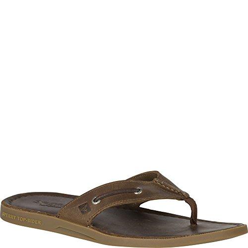 Sperry Top-Sider Men's a/o Sandal Thong (Box) Flip Flop, Dark Brown, 10 M US (Sperry Brown Sandals)