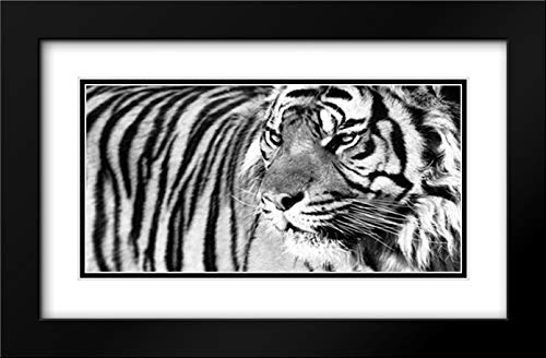 Tiger Eyes 40x22 Black Modern Frame and Double Matted Art Print by Ortega, Xavier
