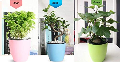 Best Planters