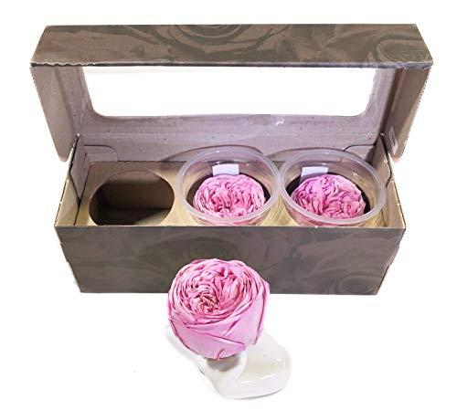 KIKA DECO Preserved Gardens Roses Head Pack (Medium, Pink)