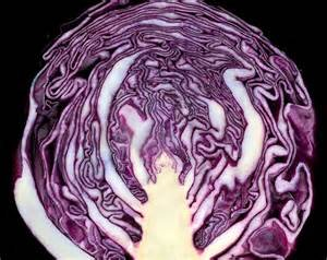 red cabbage seeds - 5
