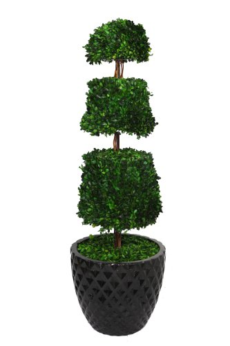 Laura Ashley 49.5 Inch Tall Preserved Natural Spiral Boxwood Cone Topiary in 16 Inch Fiberstone Planter