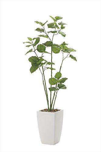 光触媒 光の楽園 人工観葉植物 アーバンブランチウンベラータ1.9m B079NSNMH5