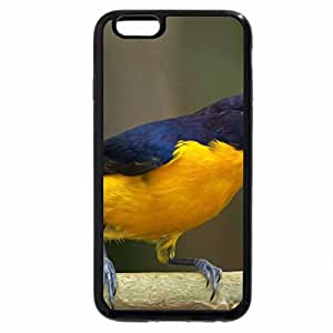 iPhone 6S / iPhone 6 Case (Black) Gaturamo
