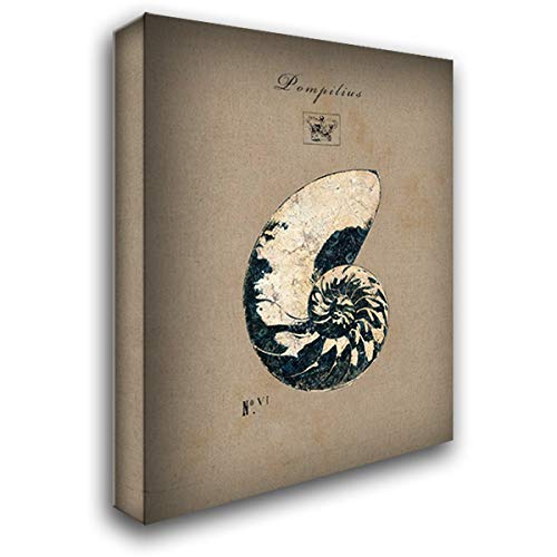 Regina Design Andrew - Vintage Linen Nautilus 47x59 Extra Large Gallery Wrapped Stretched Canvas Art by Regina Andrew Design