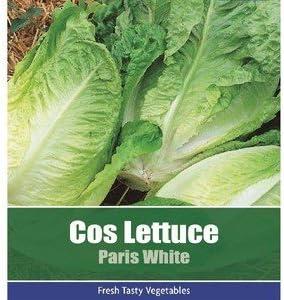 Lettuce,Little Gem,Cos,Sugar Cos Lettuce,Salad,Vegetable,Seeds,Garden,