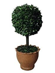 Laura Ashley 29-Inch Preserved Boxwood Topiary Ball in Clay Planter