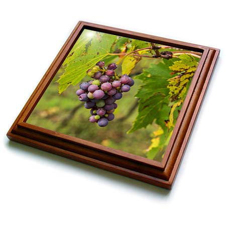 3dRose Danita Delimont - Fruit - Italy, Tuscany, Chianti, Autumn, Harvest Grapes waiting to be picked - 8x8 Trivet with 6x6 ceramic tile ()