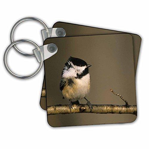 Michigan. Black-capped chickadee bird, Winter - Key Chains, 2.25 x 2.25 inches, set of 2 (kc_91136_1)