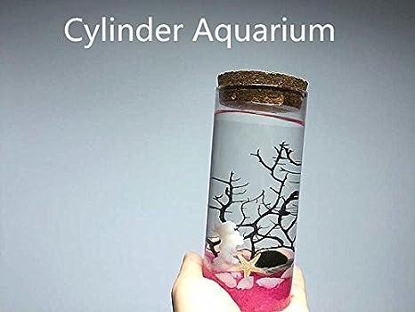 """newdreamworld Marimo Acuario Kit con jarra de cristal de cilindro/0.5 """"Marimo bola"""