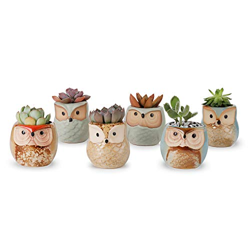 (Greenaholics Succulent Pots - 2.3 Inch Owl Glazed Ceramic Planters Pots for Succulent Planting, Little Home Decoration, Light Green, Paleturquoise&Brown, Set of 6)