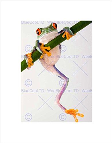 Frog Photo Frame (TREE FROG GREEN CLIMBING BLACK FRAME FRAMED ART PRINT PICTURE MOUNT B12X9495)