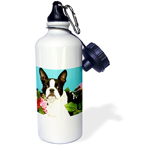 21 Boston Bottle (3dRose wb_893_1 Emma Boston Terrier Sports Water Bottle, 21 oz, White)