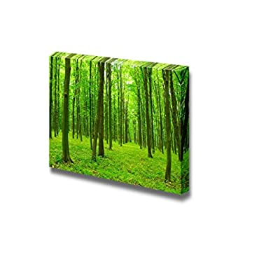That's 100% USA Made, Marvelous Style, Trees in a Green Forest in Spring Wall Decor