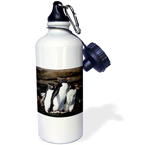 (3dRose wb_86486_1 Falkland Islands, Rock hopper penguins-SA09 CMI0123-Cindy Miller Hopkins-Sports Water Bottle, 21 oz, White)