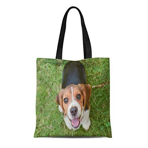 Semtomn Canvas Tote Bag Brown Dog Beagle Puppy Sitting on Green Grass Happy Durable Reusable Shopping Shoulder Grocery Bag