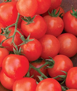 Cherry Sweetie Organic Tomato 200 Seeds By Jays Seeds (Seeds Million Tomato Sweet)