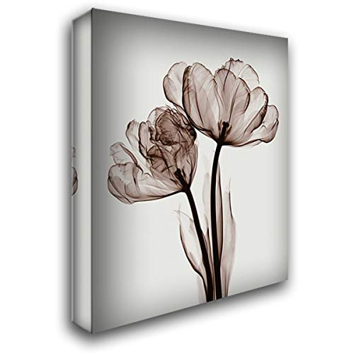 Meyers Parrot Tulips - Parrot Tulips II 28x36 Gallery Wrapped Stretched Canvas Art by Meyers, Steven N.