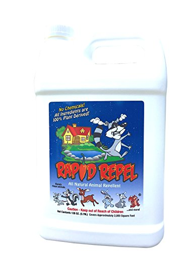 Rapid Repel Natural Nuisance Animal Repellent (1 Gallon) (Organic Squirrel Repellent)