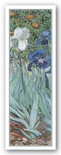 Van Gogh Iris (Vincent Van Gogh Irises Garden Saint-Remy C.1889 (Detail) 9.75 x 27.5 Print)