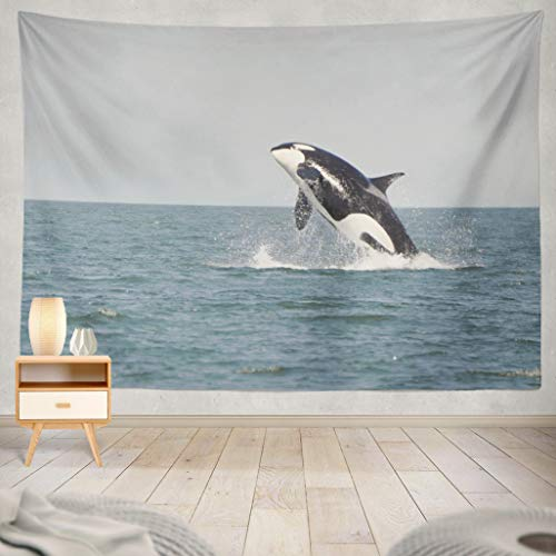 ASOCO Tapestry Wall Handing A Young Killer Whale Breaches in The Strait of Georgia Near Vancouver Wall Tapestry for Bedroom Living Room Tablecloth Dorm 60X80 Inches