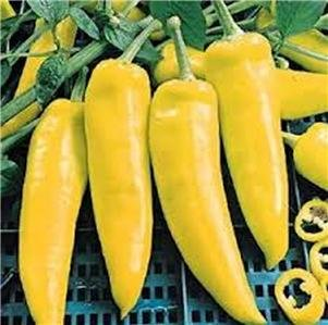 (PEPPER, HUNGARIAN YELLOW WAX SWEET PEPPER SEEDS, 20 SEED PER PACKAGE)