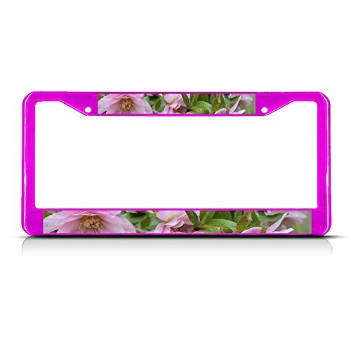 Elvira Jasper CHRISTMAS ROSES Flower Pink Metal License Plate Frame Tag Border (Christmas Plate Jasper)